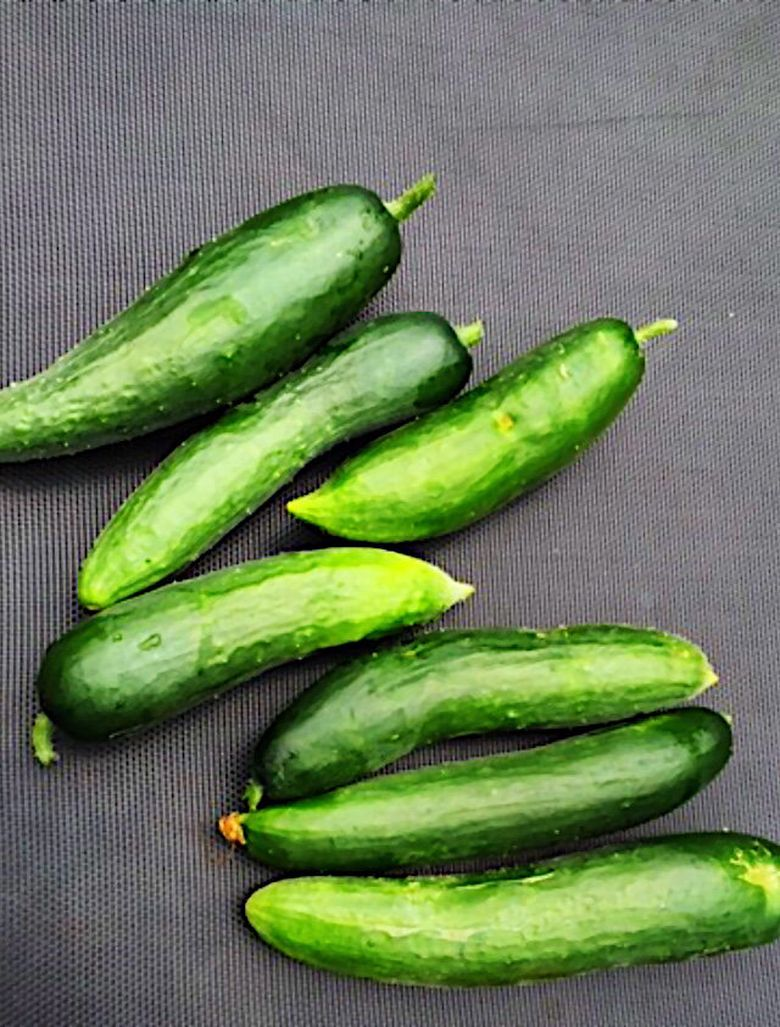 home grown cucumbers